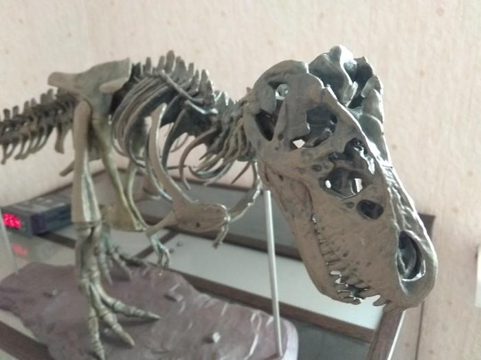 Сбылась мечта идиота) Артём, 28 годиков Мечта, Палеонтология, Скелет, Динозавры, Тираннозавр, Модель