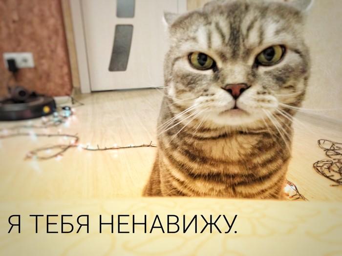 Когда твой кот – самое угрюмое существо в мире. Кот, Грусть, Гирлянда, Длиннопост