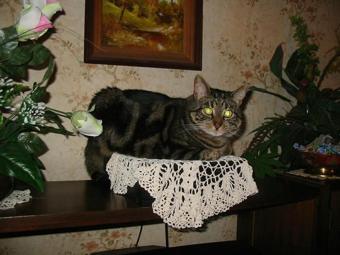 Камышовый котэ Кот, Камышовый кот, Фотография, Длиннопост