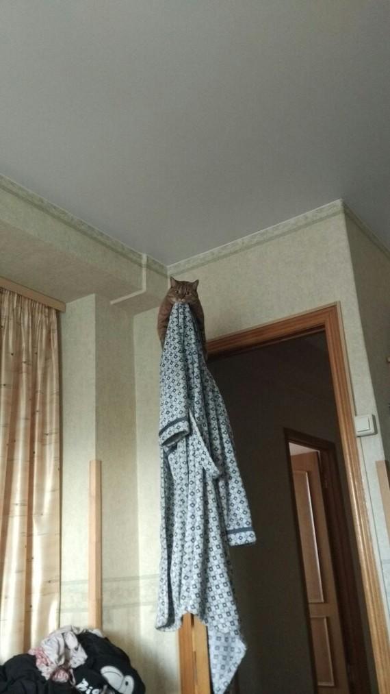 Место для раздумий о порабощении человечества Кошачьи привычки, Дверь, Длиннопост, Кот