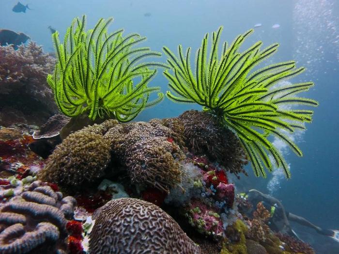 Морские лилии: Разрыв шаблона о животных Морские лилии, Животные, Океан, Природа, Юмор, Дикие животные, Книга животных, Длиннопост, Зоология, Гифка