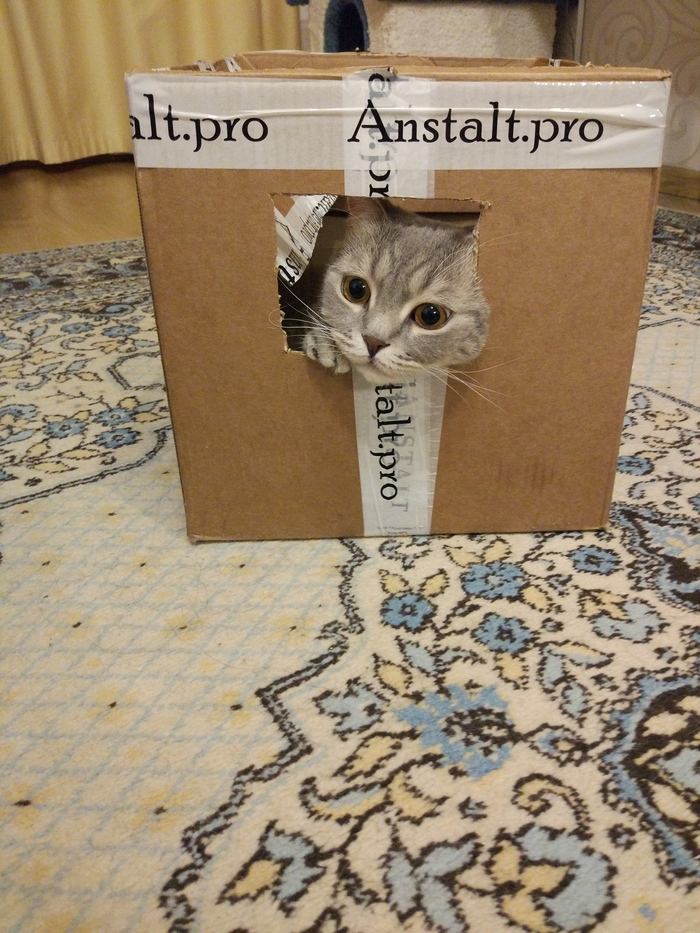 Иногда мне хочется побыть коробочкой, чтобы он меня также любил) Кот, Коробка и кот, Любовь, Навеки, Длиннопост