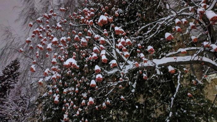 После снегопада... Фотография, Мобильная фотография