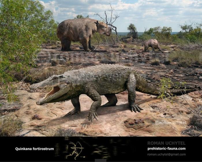 Квинкана — сухопутный крокодил из Австралии, который застал первых людей на континенте Крокодил, Эволюция, Палеонтология, Пресмыкающиеся, Австралия, Животные, Длиннопост