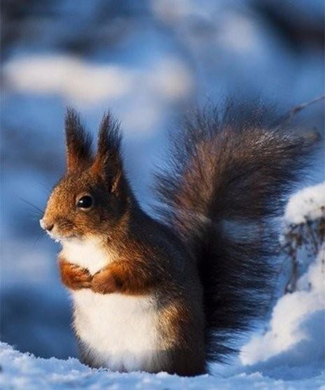 Зима... Стоп-кадр... Из сети, Фотография, Удачный кадр, Позитив, Длиннопост