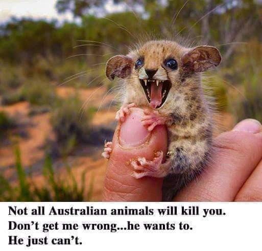 """""""Не все австралийские животные хотят убить тебя"""". Не обманывайте меня... он тоже хочет. Просто пока не может."""