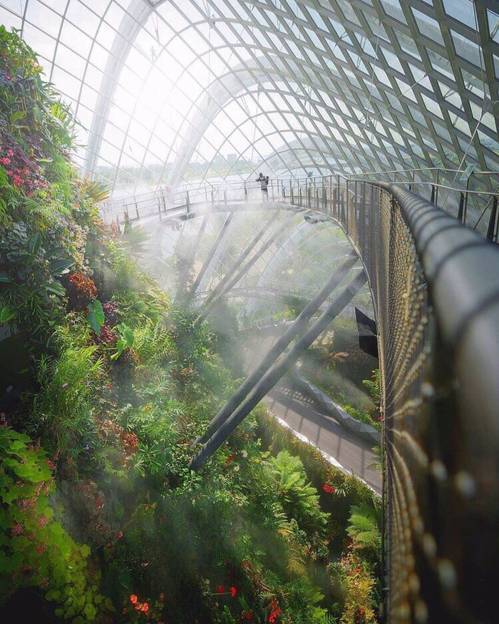 Природный парк в Сингапуре