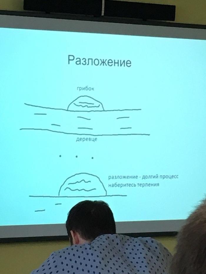 https://cs11.pikabu.ru/post_img/2019/01/16/5/1547625577124050196.jpg