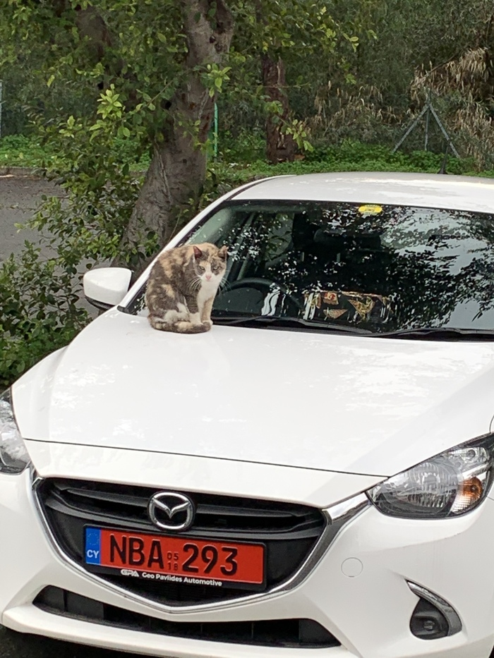 Кипрский кот Кот, Кипр, Машина