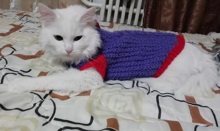 Кошка модница)
