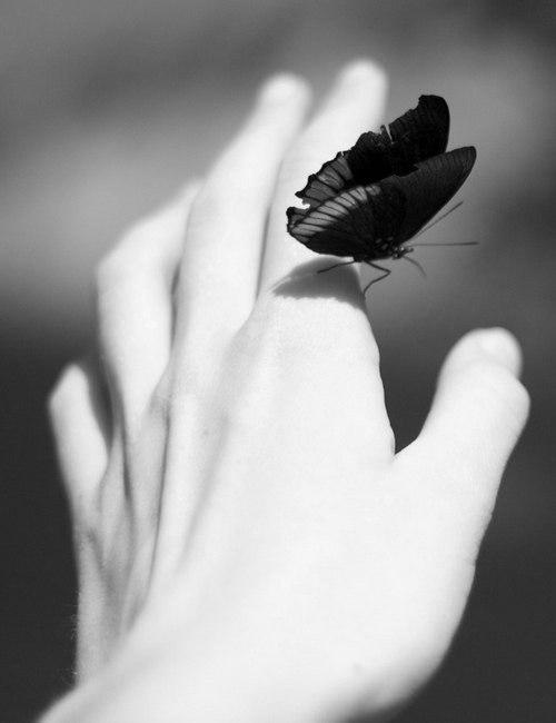 Линн Лэнгмад. Бабочка