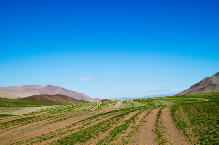 Монголия. Монголия, Горы, Дорога, Бараны, Длиннопост