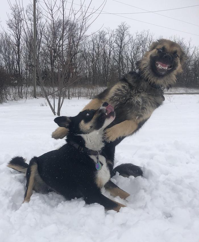 Собака-улыбака:)