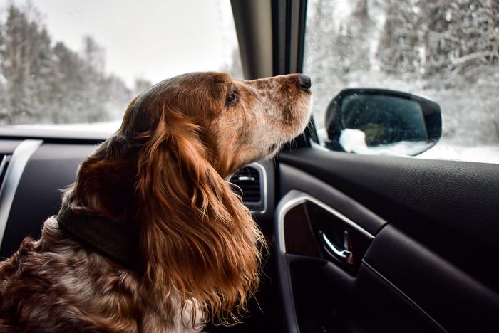 Поездки Окно, Собака, Свет, Боке, Начинающий фотограф, Длиннопост