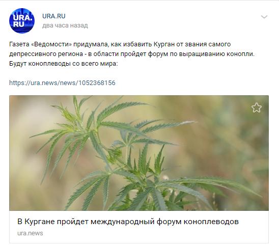 Эх, заживем! Конопля, Коноплеведы, Курган, Курганская область, Новости+