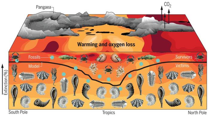 Важной причиной вымирания морских животных в конце пермского периода была нехватка кислорода Палеонтология, Наука, Вымирание, Пермский период, Копипаста, Elementy ru, Длиннопост