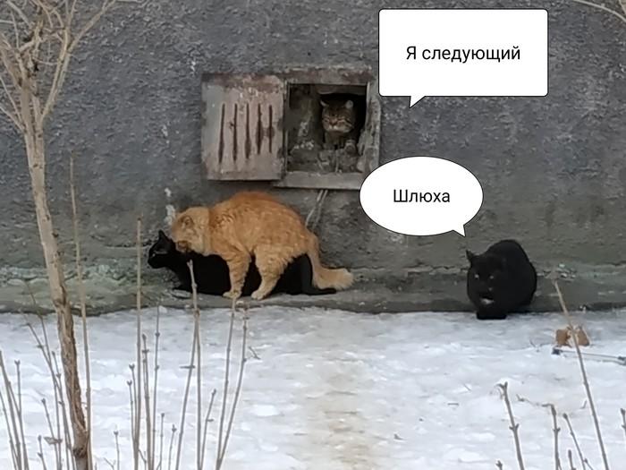 Кошачья санта-барбара