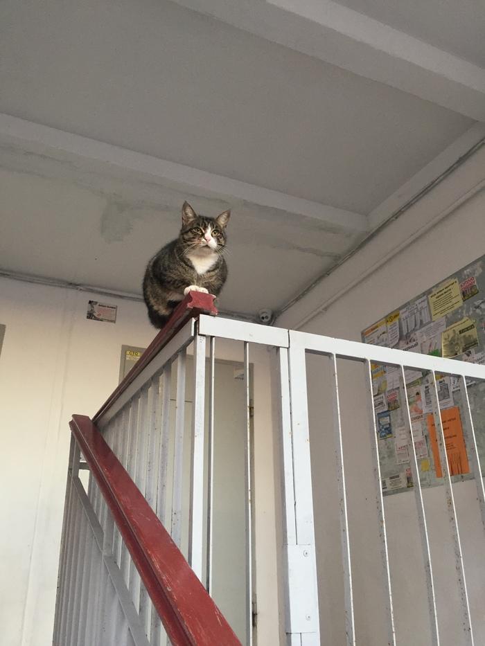 Вас обнаружили Кот, Вас заметили, Длиннопост