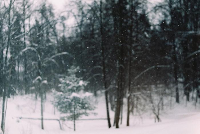 Плёнка Начинающий фотограф, Фотография, Пленка, Советская оптика, Природа, Портрет, Длиннопост
