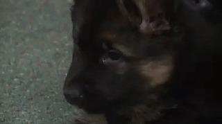 Подписал контракт для несения службы в полиции Собака, Полиция, Служба, Милота, Гифка, Щенки