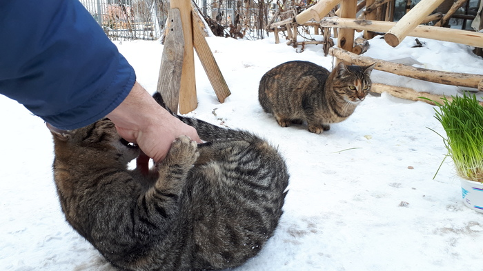 Так, просто утренние коты )) Кот, Котята, Кошкин дом, Фотография, Люди и кошки, Утро