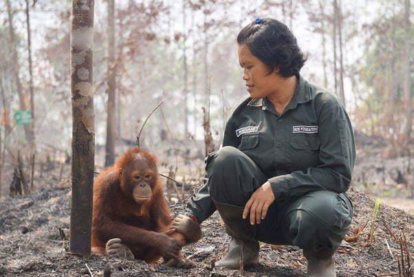 Дама утешает орангутанга после того, как сгорел его родной лес.
