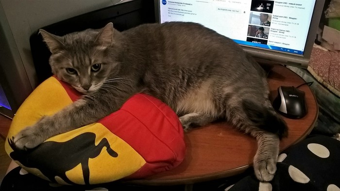 Пофиг мне на твою клавиатуру, здесь я буду отдыхать!
