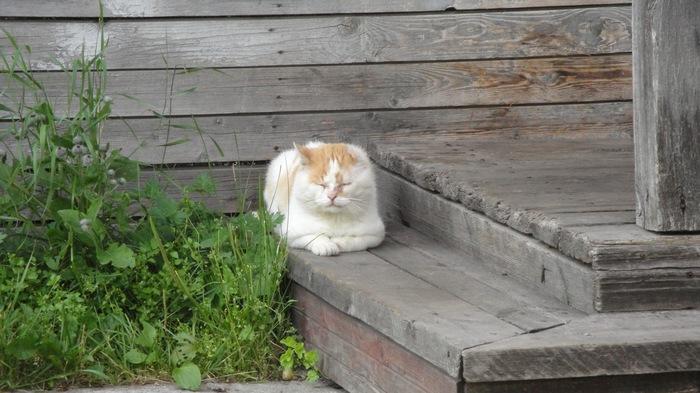 Боевой деревенский кот дзен