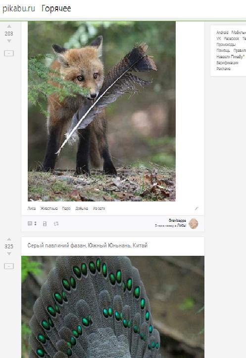 Забавные совпадения в ленте Пикабу, Скриншот