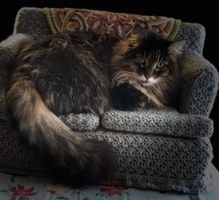 Мама связала диванчик для своего кота Reddit, Кот, Диван, Милота, Вязание
