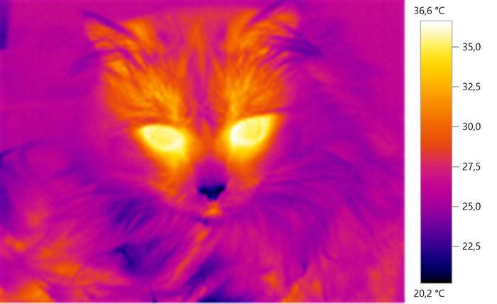 В двух измерениях Кот, Тепловизор