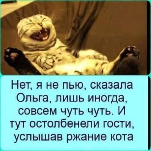 Шерстяной предатель Картинки, Стишки-Пирожки, Кот