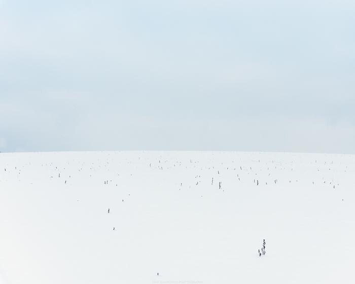 И никого на горизонте Фотография, Зима, Снег, Минимализм, Поле, Беларусь