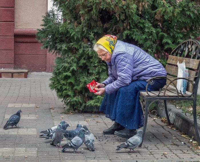Бабкины семечки Бабушка, Голубь, Семечки