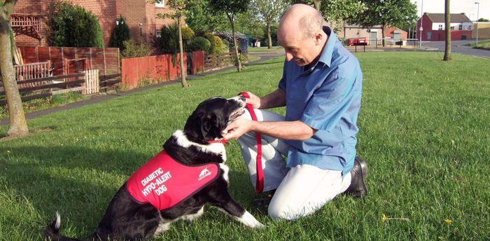 Собаки – живые «глюкометры» для больных диабетом Собака, Диабет 1-го типа, Гипогликемия, Запах, Длиннопост