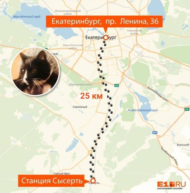25 км не помеха, когда у тебя лапки Кот, Котомафия, Лапки, Екатеринбург, Длиннопост