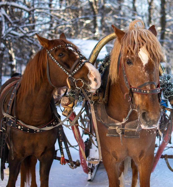 Улыбайся, нас снимают! Кони, Лошадь, Прогулка, Начинающий фотограф, Улыбнись, Nikon, Длиннопост, Фотография