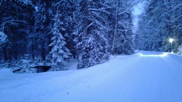 Снежное царство Снег, Аллея, Шакалы