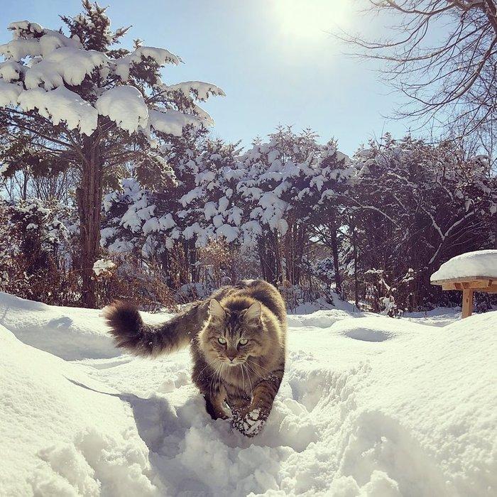 Передумал гулять Кот, Гулянка, Снег, Зима, Глаза, Фотография, Котомафия, Длиннопост