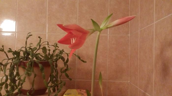 Что за цветок? Цветок, Пиво