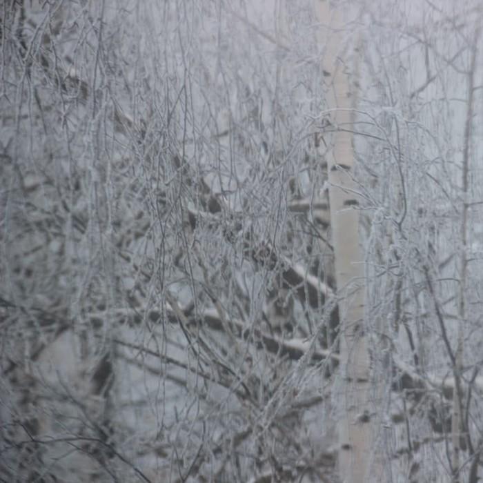Вид из окна. Зима, Иней, Красота природы, Утро, Длиннопост