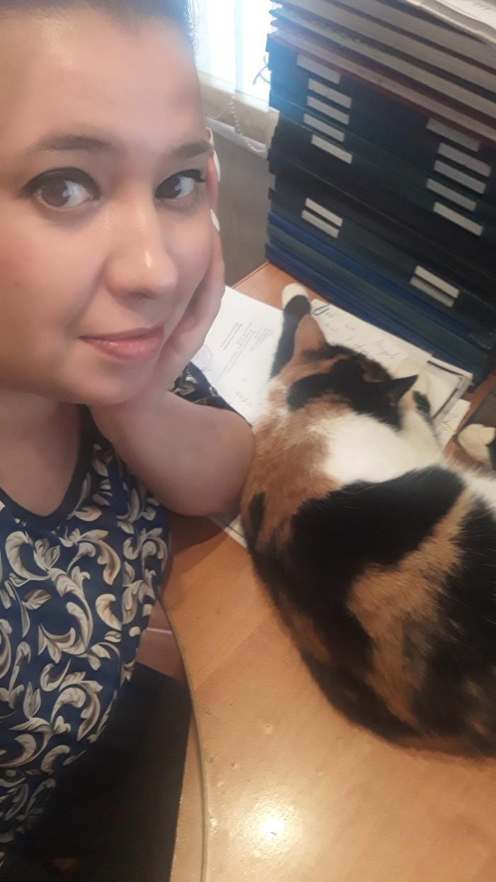 Котариус. Трехцветная кошка, Кошка по имени Кошка, Работа, Нотариус, Длиннопост