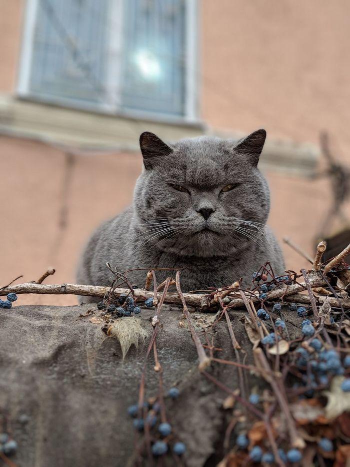 Дон Мурлеоне Кот, Котомафия, Дворовой кот, Фотография, Суровость, Пятница