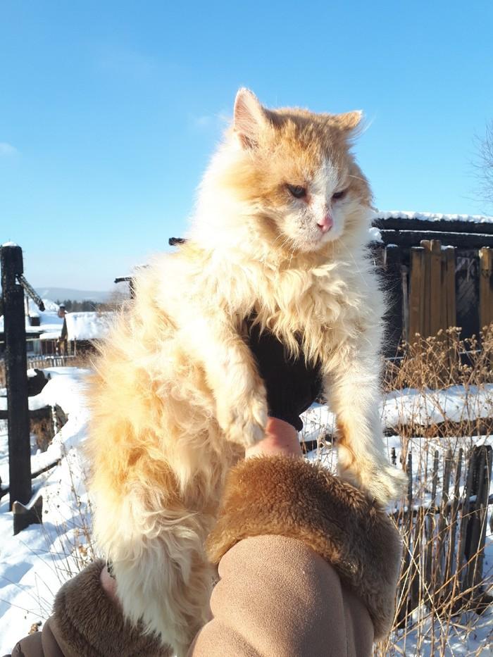 """В Челябинской области ищут """"добрые руки"""" для кота-хатико, который полтора года живет на пепелище и ждет хозяев, погибших на пожаре Кот, Челябинская область, Златоуст, Длиннопост"""