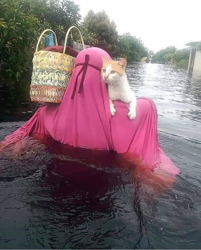 Спасти котика