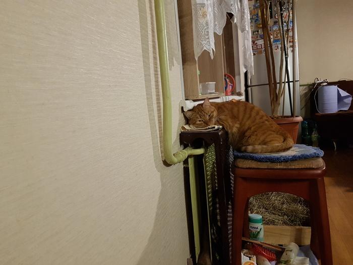 Коты любят тепло. Кот, Котомафия, Тепло