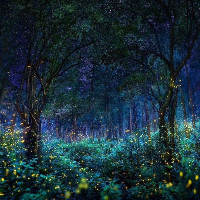 Огни ночного леса Фотография, Ночь, Лес, Огни, Красота, Красивые места