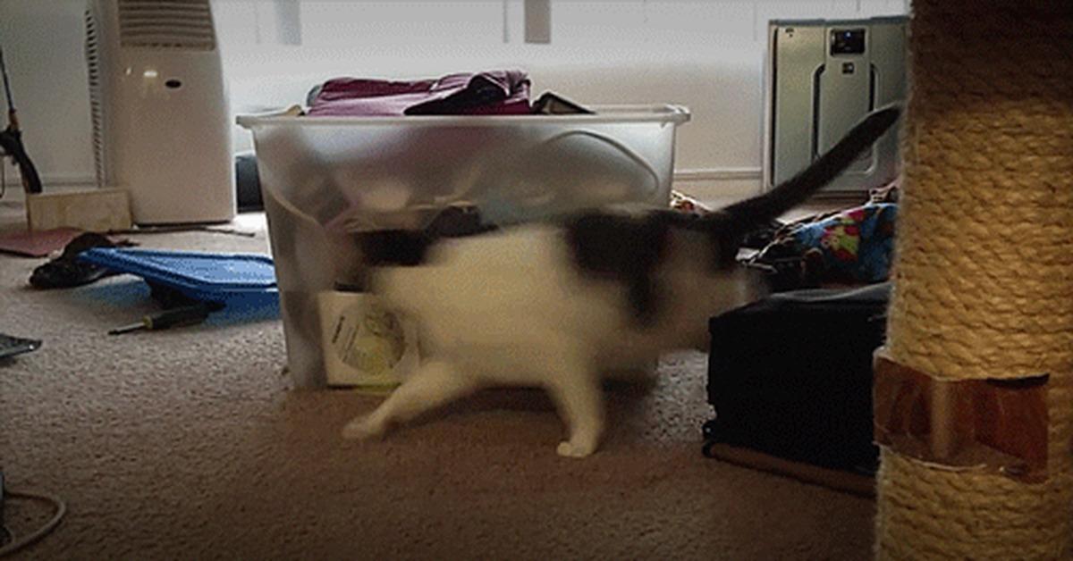 люди гифка кот убегает самое