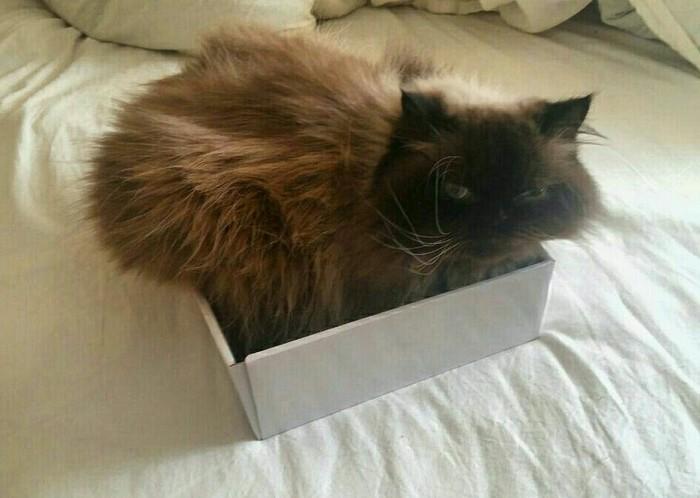 Впихнуть невпихуемое Кот, Коробка, Впрочем ничего нового, Коробка и кот