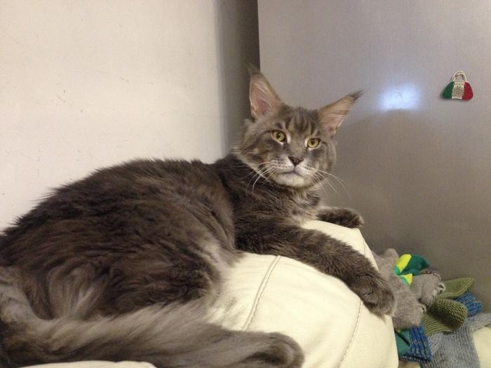 Пропал кот [вернулся домой] Сила Пикабу, Потерялся кот, Набережные челны, Кот, Помогите найти, Без рейтинга